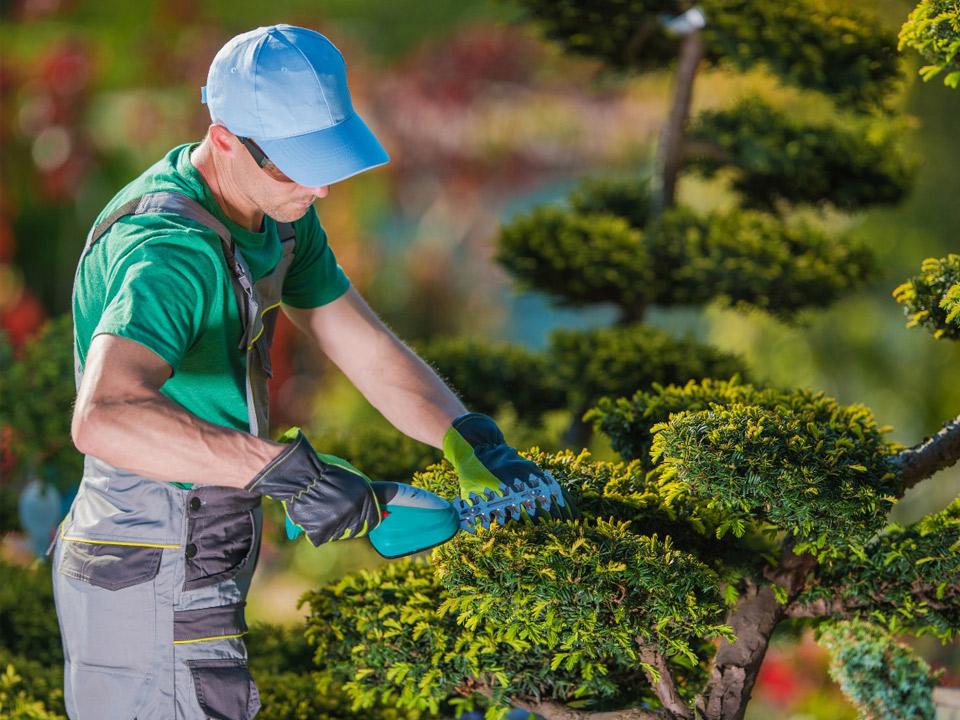 servicos-tercerizados-jardinagem